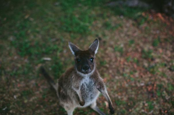 perth-west-australian-kangaroo-wedding-flowers-photographer-inspiration38