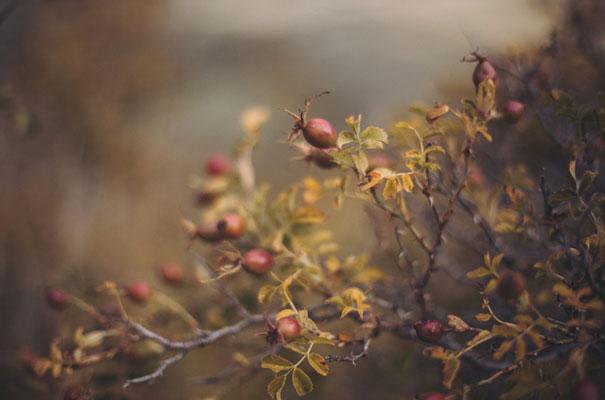 dark-romantic-purple-gold-forest-wedding-inspiration62